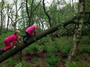 Kinderen klimmen op boomstam